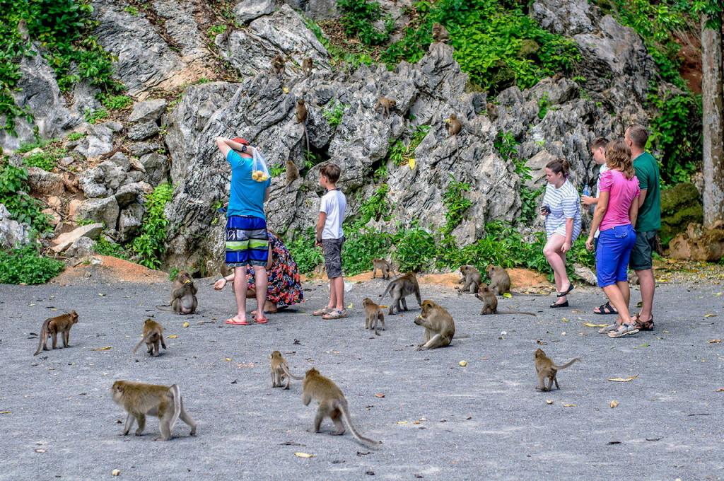 monkey phuket elephant tours