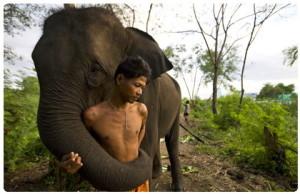Thai elephants phuket