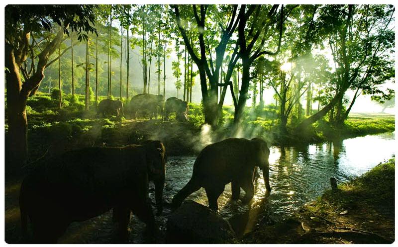 elephant  tours phuket trekking