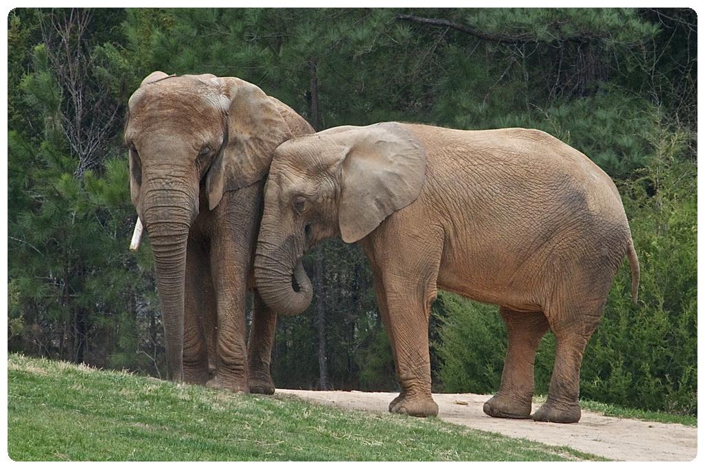elephant trekking tours phuket