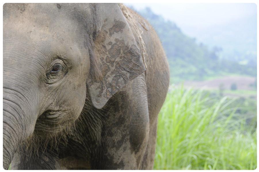 phuket elephant tours