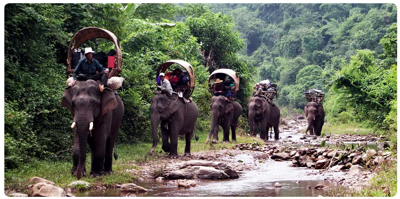 tours phuket trekking elephant