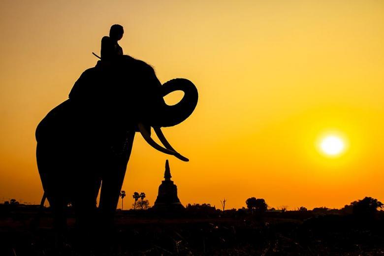 Bangkok Day Tours Elephant