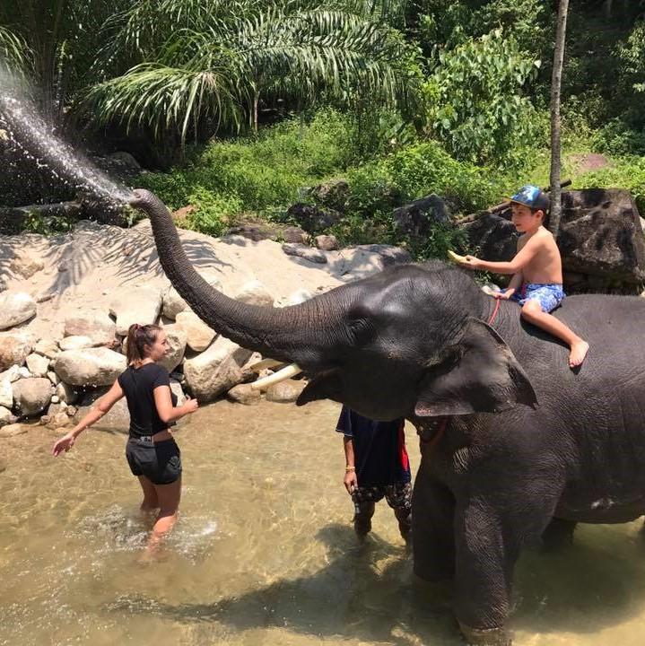Elephant Bathing Phuket 2